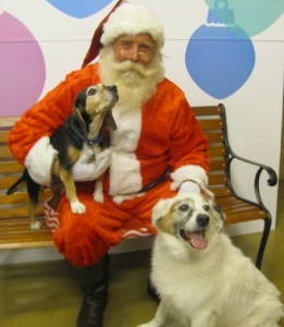 Perry Dogs w.Santa