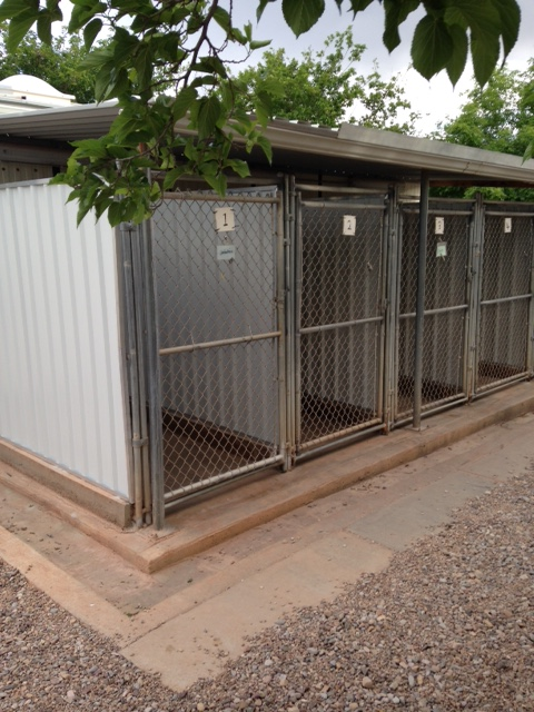 New outside kennel walls